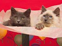 Самые оригинальные подарки— котенок в подарок. Источник http://www.fullhdoboi.ru