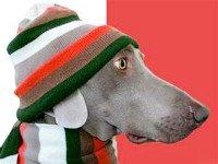 Одежда для собак своими руками— это ПРОСТО. Источник http://mm.bing.net