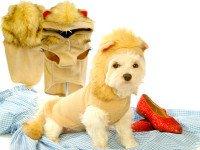 Почему бы не смастерить маскарадную одежду для собаки своими руками? Источник http://doghalloweencostumesshop.com
