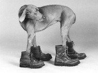 Обувь для собаки должна подходить по размеру. Источник http://www.dogpictures.co