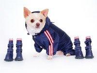Выбирайте одежду и обувь для собак в одном стиле. Источник http://scrappyscloset.com