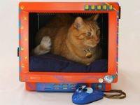 Декорируйте старый корпус монитора, и он станет домиком для кошки! Источник http://gizmodo.com